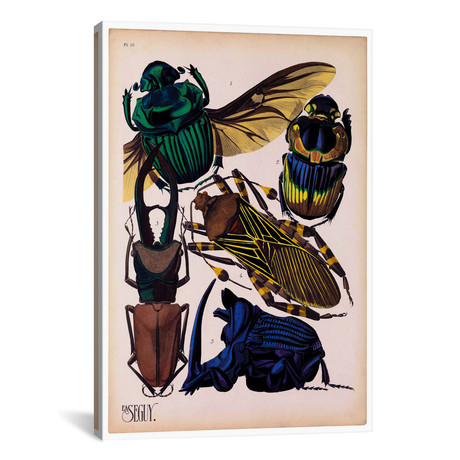 """Insects, Plate 7 by E.A. Seguy by Print Collection (18""""W x 26""""H x 0.75""""D)"""
