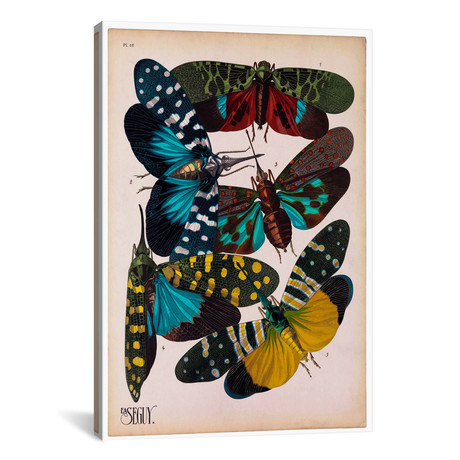 """Insects, Plate 8 by E.A. Seguy by Print Collection (18""""W x 26""""H x 0.75""""D)"""