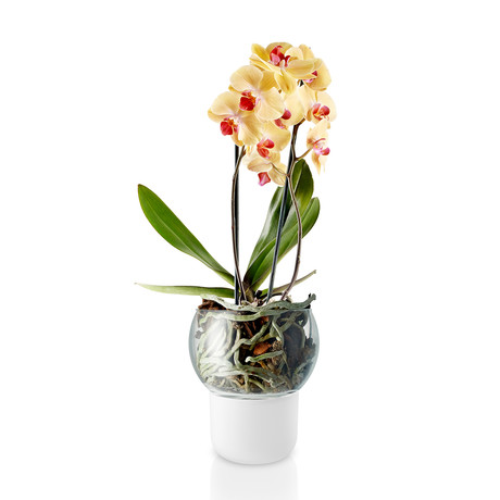 Self-Watering Orchid Pot // Glass Top (Large)
