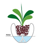 Self-Watering Orchid Pot (White)