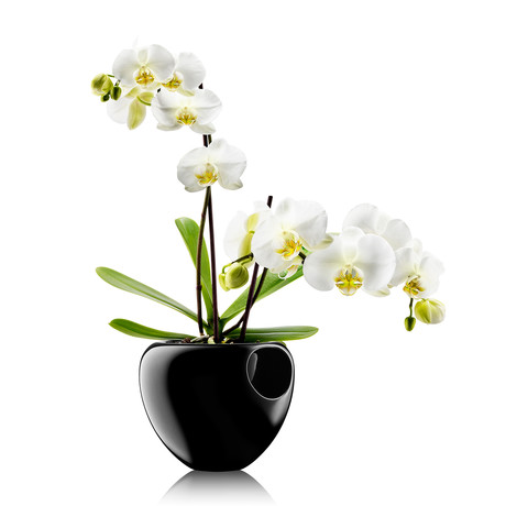 Self-Watering Orchid Pot (Black)