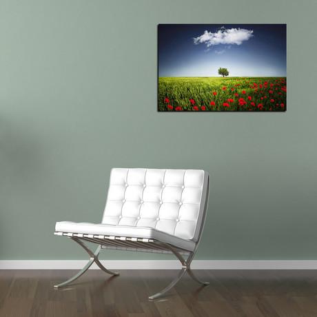 Lone Tree In a Poppy Field
