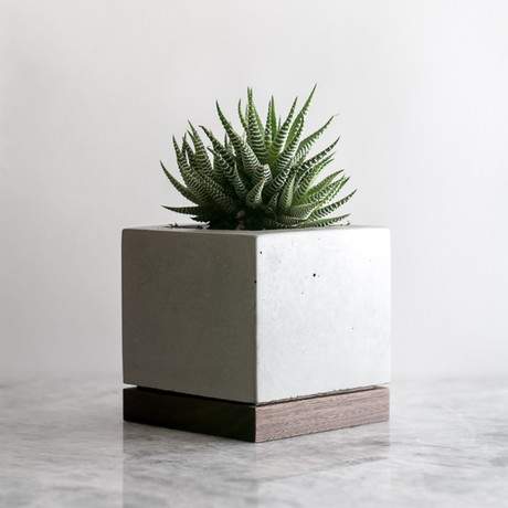 Planter // Walnut + Concrete