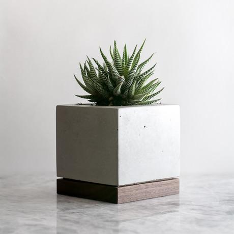 Planter // Walnut + Concrete