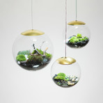 "Globe // Suspended Terrarium (8"" Terrarium + LED Light)"