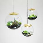 """Globe // Suspended Terrarium (8"""" Terrarium + LED Light)"""