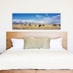 "Bison Herd, Grand Teton National Park, Wyoming, USA // Panoramic Images (60""W x 20""H x 0.75""D)"