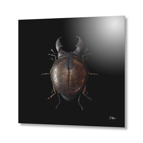 Engraved Entomology B // Aluminum Print
