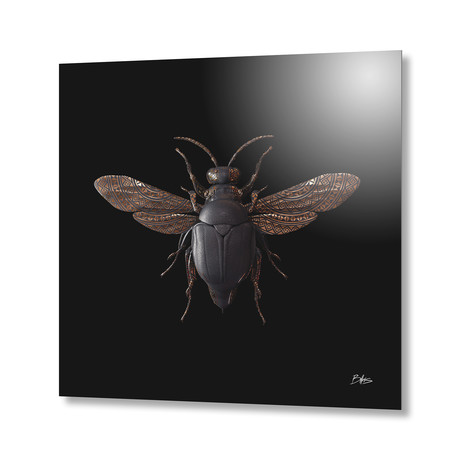 Engraved Entomology F // Aluminum Print