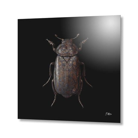Engraved Entomology D // Aluminum Print
