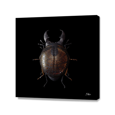 Engraved Entomology B // Stretched Canvas