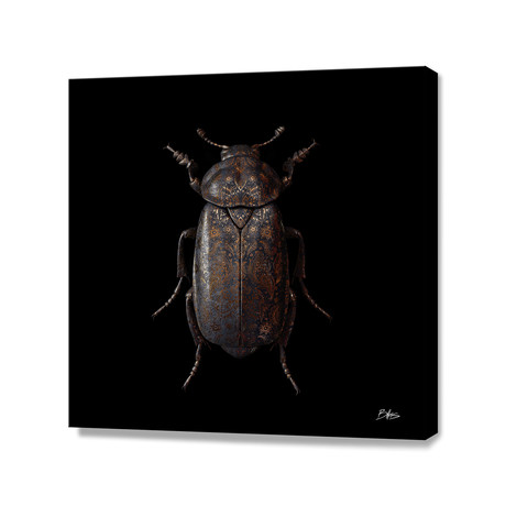 Engraved Entomology D // Stretched Canvas