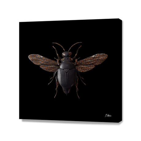 Engraved Entomology F // Stretched Canvas