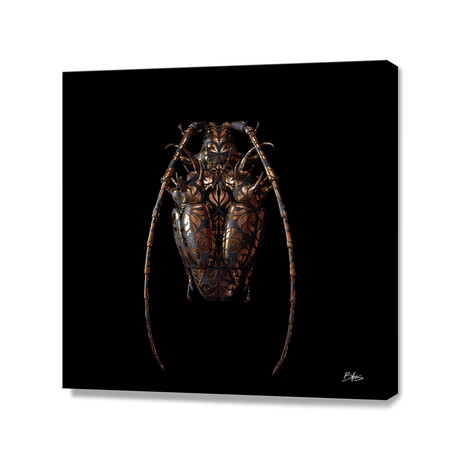 Engraved Entomology G // Stretched Canvas