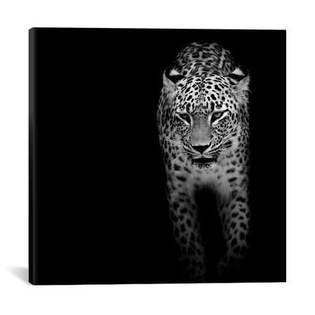"""Leopard II // Lukas Holas (18""""W x 18""""H x 0.75""""D)"""