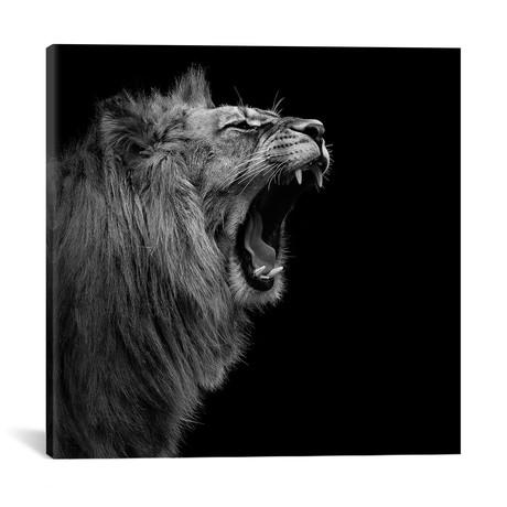 "Lion In Black & White I // Lukas Holas (18""W x 18""H x 0.75""D)"