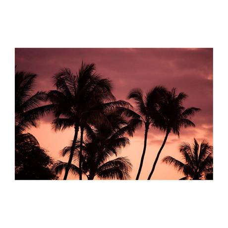 Night Sky Palms // Canvas