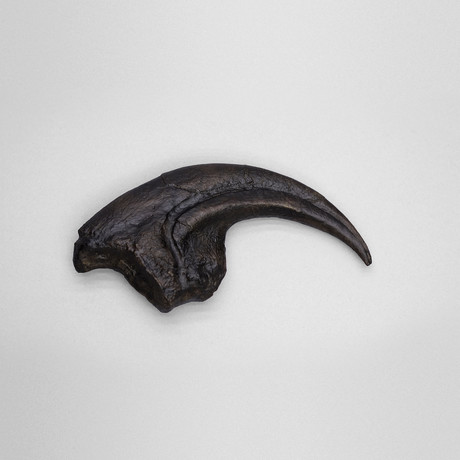 Allosaurus Claw