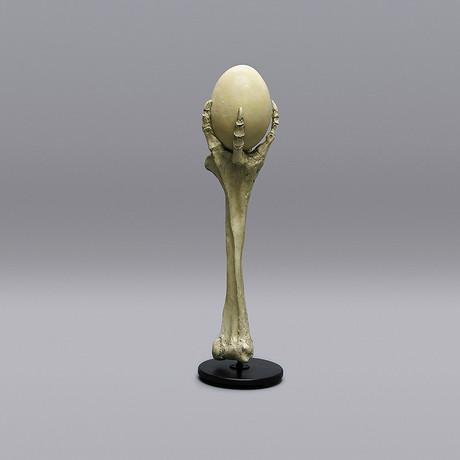 Fossil Elephant Bird Egg + Stand