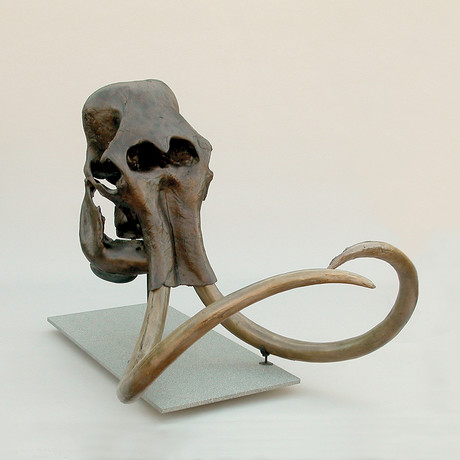 Woolly Mammoth Skull + Stand