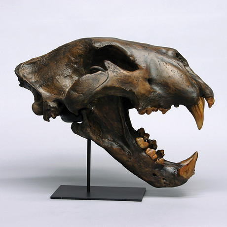 American Lion Skull + Stand