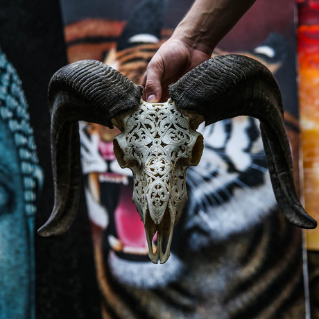 Hand Carved Ram Skull // Tribal 1