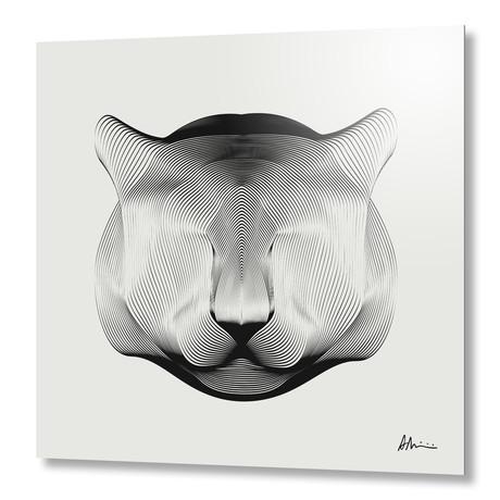 Puma // Aluminum