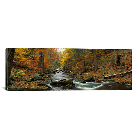 "Fall Trees Kitchen Creek PA // Panoramic Images Canvas Print (36""W x 12""H x 0.75""D)"