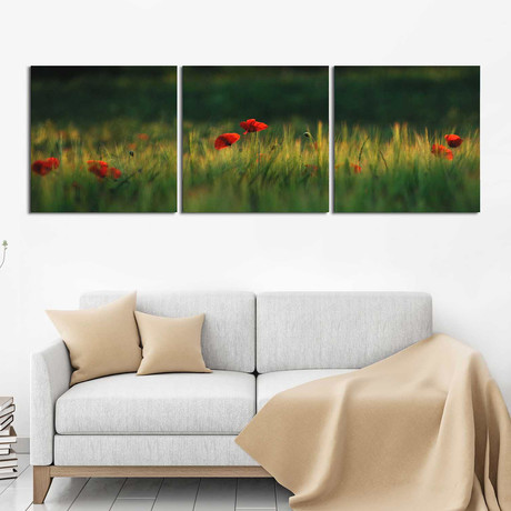 "Tulips in the Field (20""H x 60""W x 1""D)"