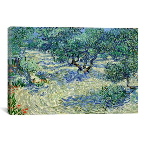 "Olive Orchard // Vincent van Gogh // 1889 (18""W x 26""H x 0.75""D)"