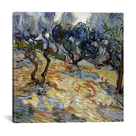 """Olive Trees // Vincent van Gogh // 1889 (18""""W x 18""""H x 0.75""""D)"""