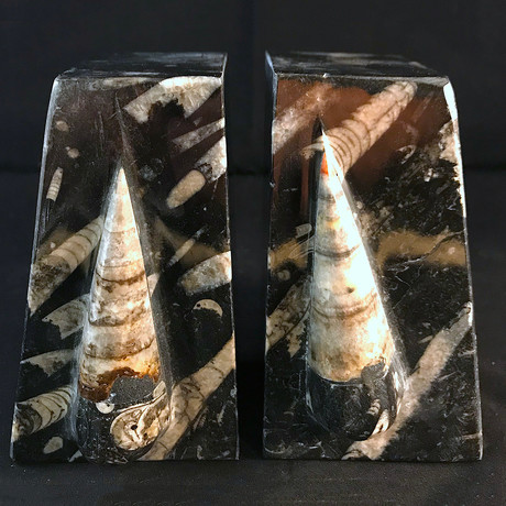 Fossil Orthoceras Bookends