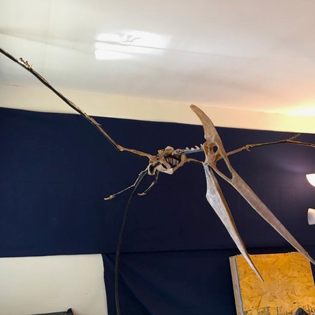 86 Million Year Old Pteranodon Skeleton