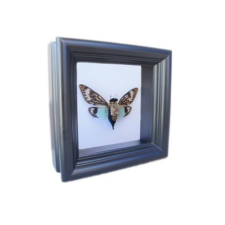 Steampunk Cicada Shadow Box