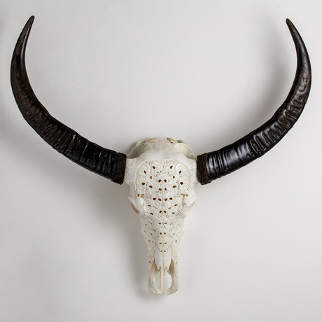 Carved Buffalo Skull // Skeletons