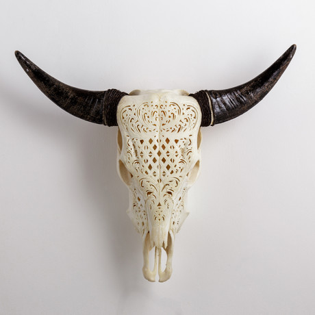 Carved Cow Skull // XL Horns // Celtic Flower