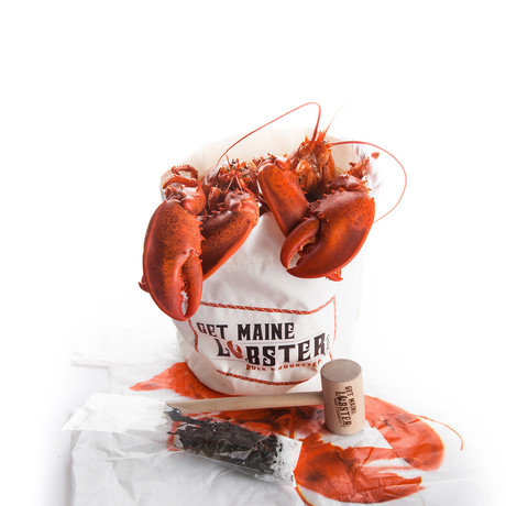 Live Maine Jumbo Lobsters // 4 Pack (November 22 Delivery)