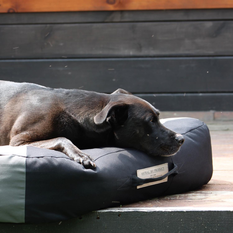 Astral Dog Bed