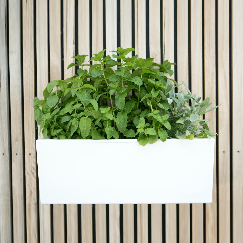 Glowpear Mini Wall Self Watering Planter Glowpear Touch Of Modern
