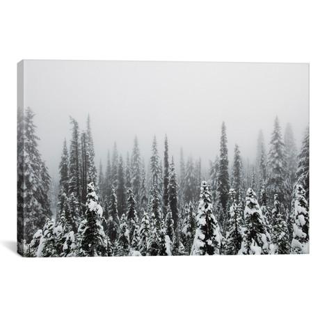"Trees Of Mt. Rainier // Christopher Kerksieck (26""W x 18""H x 0.75""D)"