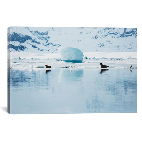 "Seals Of The Glacier Lagoon // Christopher Kerksieck (18""W x 26""H x 0.75""D)"