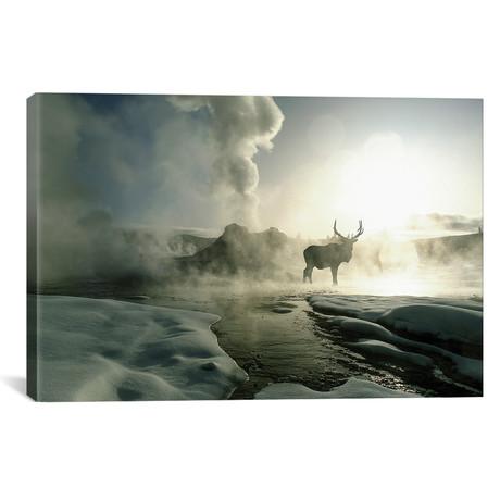 "Bull Elk Silhouette At Sunrise, Castle Geyser // Jim Zuckerman (26""W x 18""H x 0.75""D)"