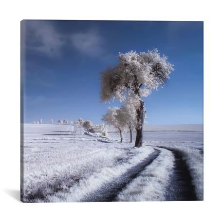 "Winter In Summer // Piotr Krol (18""W x 18""H x 0.75""D)"
