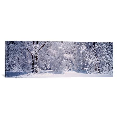 "Snowy Winter Landscape, Yosemite National Park, California (36""W x 12""H x 0.75""D)"