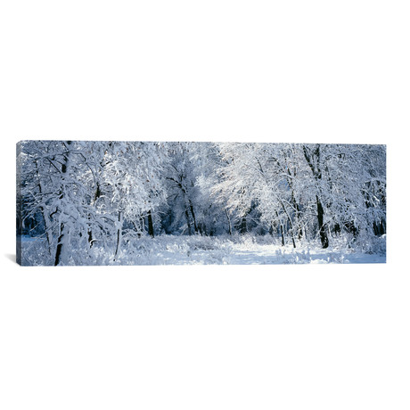 """Winter, Forest, Yosemite National Park, California (36""""W x 12""""H x 0.75""""D)"""