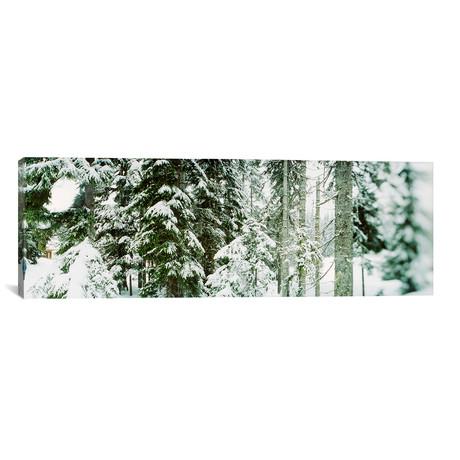 "Snow Covered Evergreen Trees at Stevens Pass, Washington (36""W x 12""H x 0.75""D)"