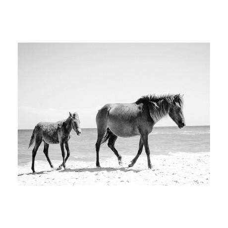 """Beach Steeds Black & White (24""""W x 3.8""""H x 30""""D)"""