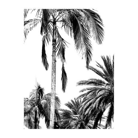 """Palm Dreams Black & White (24""""W x 3.8""""H x 30""""D)"""