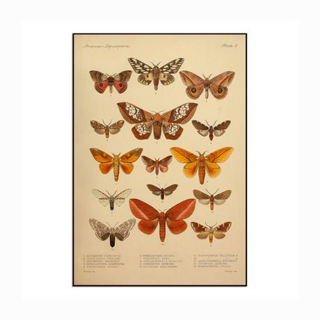 "American Lepidoptera (8.5""W x 12.5""H x 1""D)"