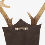Contemporary Deer Antlers Wall Art